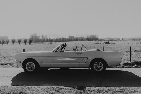 Mustangblzw.jpg
