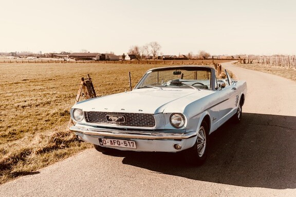 Mustangbl1.jpg